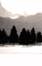 "Trees, Leavenworth (bw)"", 2015, archival inkjet print, 34.5 x 22"""