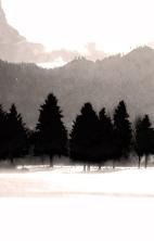 "Trees, Leavenworth (bw)"", 2015, archival inkjet print, 34.5 x 22"""